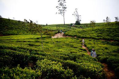 Atrakcje Sri Lanki